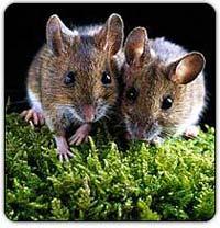 """Hội nghị Quốc tế """"nghiên cứu sinh học và quản lý động vật gặm nhấm"""""""