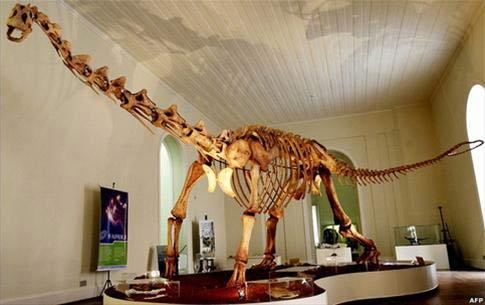 Brazil phát hiện hóa thạch loài khủng long mới