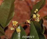 Kỳ nam và Trầm hương