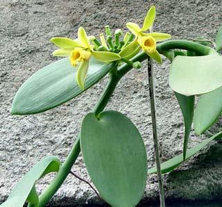 Vài nét về chống hạn ở thực vật