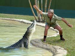 Người hâm mộ Irwin 'trả thù cá đuối'