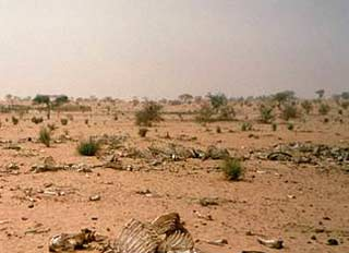 Trái đất ấm lên, những hậu quả nguy hại