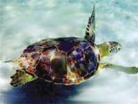 Tặng 13 con rùa biển cho khu bảo tồn biển