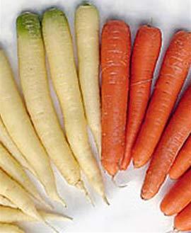 Cà rốt trắng