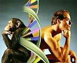 Con người dường như không tuân theo quy luật tiến hóa