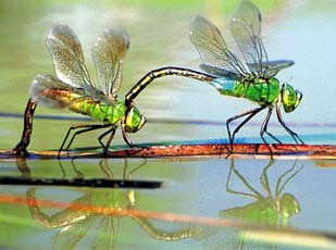 99% côn trùng có lợi cho con người