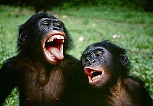 """Tinh tinh lùn (bonobo) là một trong những loài hoạt động tình dục hoang dại nhất với cả đực lẫn cái. """"Tất cả tinh tinh lùn đều lưỡng tính"""","""