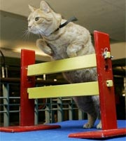 Cúp vô địch dành cho mèo