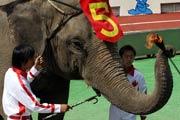 Thế vận hội động vật tại Trung Quốc