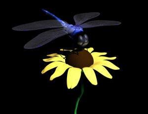 Kiểu ngụy trang kỳ lạ của chuồn chuồn