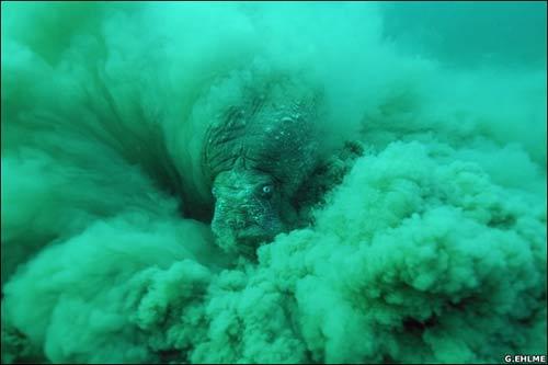 Con quỷ trong bão cát - ảnh thiên nhiên đẹp nhất 2006