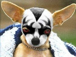 Các giống chó chỉ khác nhau ở một gien