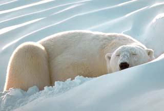 Những điều kỳ lạ về giấc ngủ động vật