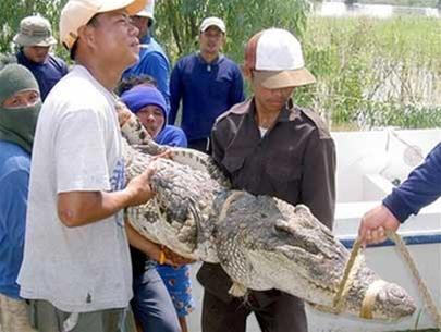 Thái Lan: báo động cá sấu sổng chuồng