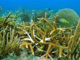 Thế giới sẽ không còn san hô?