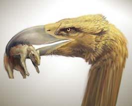 Phát hiện hóa thạch một loài chim ăn thịt khổng lồ