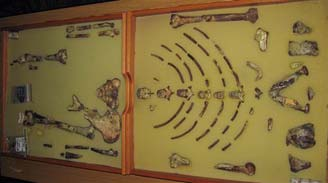Tranh cãi về việc đưa hóa thạch người tiền sử Lucy ra khỏi Ethiopia