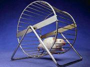Giảm cân giúp tiêu diệt các khối u ở chuột