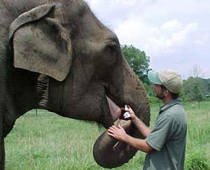 Xung đột giữa người và voi, giải quyết ra sao?