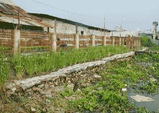 An Gianh: Trồng cỏ vetiver bảo vệ kè, bờ sông, đê bao