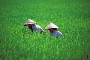 11 tỷ đồng ứng dụng công nghệ sinh học trong nông nghiệp