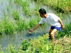 Ô nhiễm vì thuốc bảo vệ thực vật