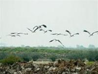 VN: đề cử ít nhất 5 khu Ramsar mới trước năm 2008