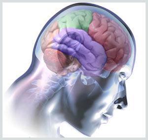 Não người hoạt động như một máy vi tính