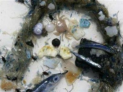 """Thái Bình Dương với """"biển rác nhựa"""""""
