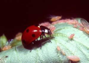 Sự đa dạng sinh học kiểm soát sự cân bằng của hệ sinh thái
