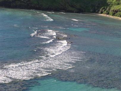 Đại dương đang bị axit hóa