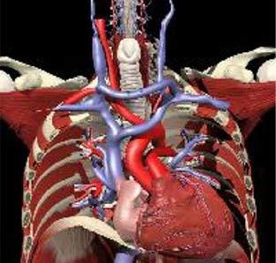 Công nghệ 3D giúp xác định vị trí cơn đau
