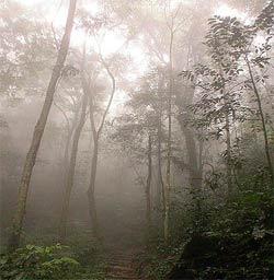 VN - một trong các nước có tốc độ phục hồi rừng nhanh nhất thế giới