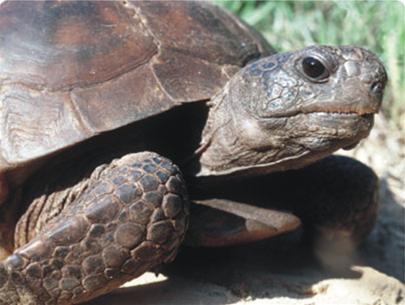 Mai rùa hình thành như thế nào?
