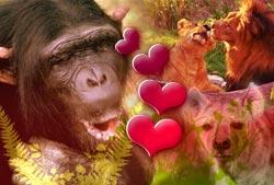 Trò chơi tình dục trong thế giới động vật