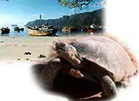 Việt Nam: Theo dõi rùa biển bằng vệ tinh