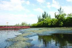 Sông Thị Vải bị ô nhiễm nặng