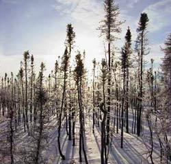 Cháy rừng làm giảm nhiệt độ bán cầu Bắc
