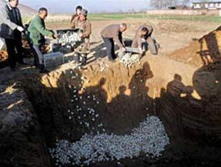 Ba tỉnh Trung Quốc có trứng vịt lòng đỏ tươi