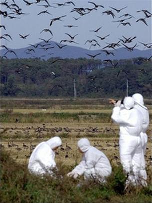 Hàn Quốc phát hiện trường hợp nghi nhiễm cúm gia cầm