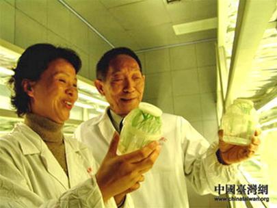 Vận động Nobel cho cha đẻ của lúa lai