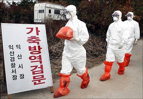 Các quan chức kiểm dịch động vật Hàn Quốc đi tiêu hủy gia cầm. Chữ trên bảng ghi: Thanh tra kiểm dịch.