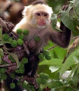 """Khỉ cũng xức """"nước hoa"""""""