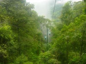 Nhiều loại cây ở rừng mưa nhiệt đới có thể liên kết phát tán hạt giống