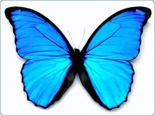 Học cách chế tạo màn hình phẳng từ bướm