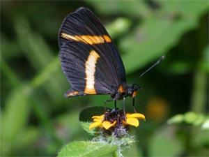 Khu bảo tồn bươm bướm tại Mexico