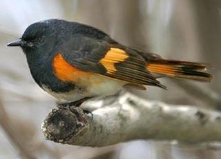 Lông chim thay đổi theo thức ăn