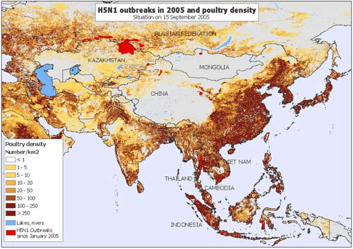 FAO: H5N1 có thể gây ra hiệu ứng domino