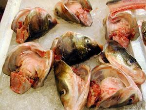 Hong Kong: cá có chất gây ung thư