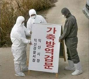 Hàn Quốc phát hiện ổ cúm gia cầm thứ ba